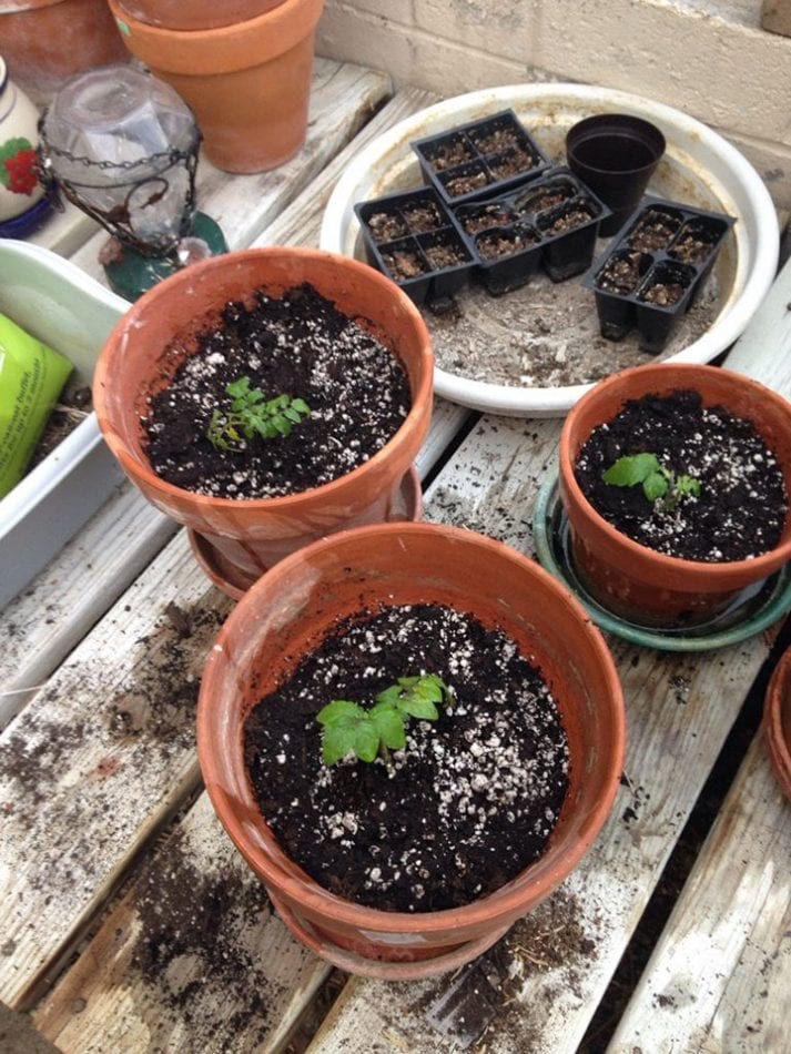 Gardening from Seed